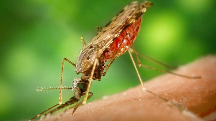 Exclusive Diet Recommendations For Malaria Patients