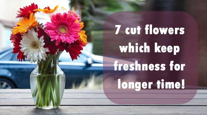 7 Cut Flowers Which Keep Freshness For Longer Time!