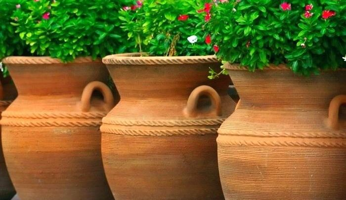 How To Select Pots For Your Garden Plants